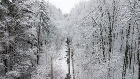 View of the snow-covered country road with pines.  Stock Photo