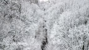 View of the snow-covered country road with pines.  Royalty Free Stock Photo