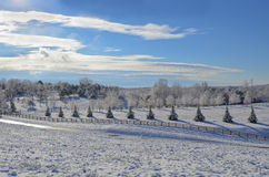 View of Snow Covered Pasture Land. A beautiful winter morning, the pasture is covered in the first snow of the season. A fence runs along the border at the royalty free stock photography