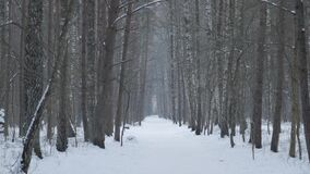 View of the snow-covered road in the winter forest. View of the snow-covered road in the winter forest, handheld footage stock video footage