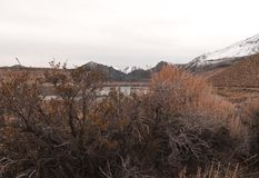 The view of the snow covered Sierras near June Lake. The view of the snow covered Sierras through some desert brush around June Lake stock photos