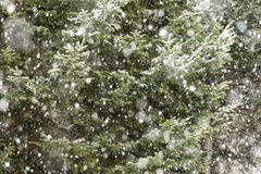 Snow Against Trees Royalty Free Stock Photos