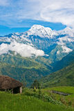 View of snowed mountain peak above the green valley in Himalayas, Nepal. View of snowed mountain peak above the green valley high up in Himalayas, Nepal royalty free stock images