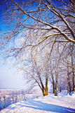 View on snowed trees in winter park instagram stile royalty free stock photos