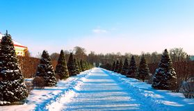 Snowy alley of the Lower Garden. Oranienbaum. Stock Photography