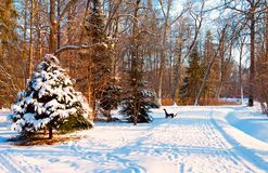 Snowy alley in the Park. View of the snowy alley in the Park with trees covered in snow Royalty Free Stock Image