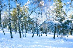 A view on a snowy forest Royalty Free Stock Photo