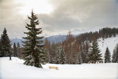 The view of snowy forest in mountains Stock Photos