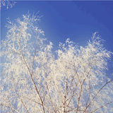 View on snowy trees and blue sky. Vector nature Stock Image