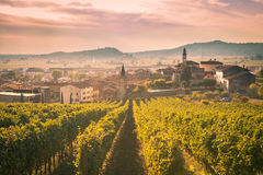 View of Soave (Italy) surrounded by vineyards. Stock Images