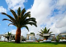 View of some beds sunloungers and palm trees on a green grass in a beach club of Tenerife,Canary Islands,Spain. Travel,vacation,relax concept stock photos