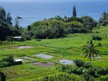 View a farm field in Maui stock photos