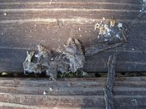 OWL EXCRETION EVIDENT OF RODENT INGESTION ON OLD WOODEN STEP. View of some owl excretion with remnant of rodent fur as evidence of ingestion lying on a wooden stock photo