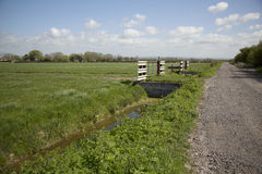 View of Somerset Levels. A view across a field on the Somerset Levels in Somerset, UK Stock Photo