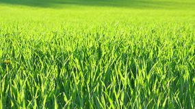 View sown fields , southern Bohemia. Czech Republic Stock Photos