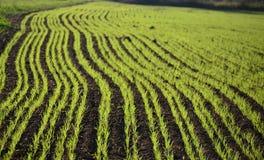 View sown fields , southern Bohemia Stock Photos