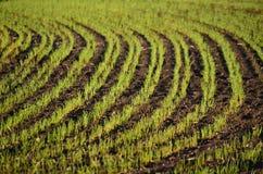 View sown fields , southern Bohemia Royalty Free Stock Photo