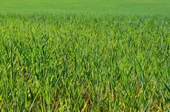 View sown fields , southern Bohemia. Czech Republic Stock Images