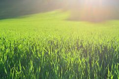 View sown fields , southern Bohemia. Czech Republic Royalty Free Stock Photos