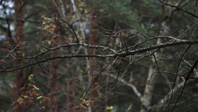 View sparrow sitting on tree branch without leaf in autumn day in park. Nature stock footage