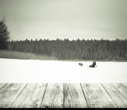 View on sportsman on the track in snowy winter  forest from dark Stock Photos