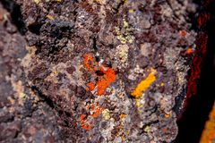 View of spots of colorful red lichen on lava rock in desert lands near Bend, Oregon. Spots of colorful red and yellow lichen on lava rock in desert lands near royalty free stock image