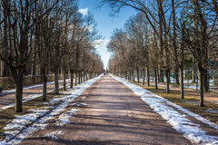 View of spring alley with trees. Alleis in Peterhof in the spring Stock Photo