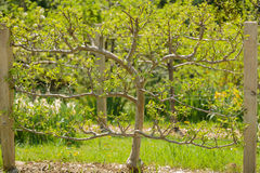 view of spring garden tree on sunny warm day Stock Photo