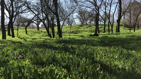 View in spring park, green grass and trees. Bottom view, sound stock video footage