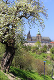 View on the spring Prague Castle, green Nature and flowering Trees, Czech Republic Royalty Free Stock Photo