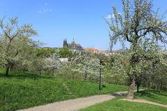 View on the spring Prague  Castle, green Nature and flowering Trees, Czech Republic Royalty Free Stock Image