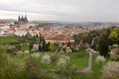 View on the spring Prague City with gothic Castle, green Nature and flowering Trees, Czech Republic Royalty Free Stock Photography