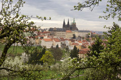 View on the spring Prague City with gothic Castle, green Nature and flowering Trees, Czech Republic Stock Image