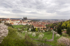 View on the spring Prague City with gothic Castle, green Nature and flowering Trees, Czech Republic Royalty Free Stock Image