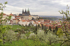 View on the spring Prague City with gothic Castle, green Nature and flowering Trees, Czech Republic Stock Photos