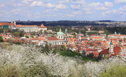View on the spring Prague City with green Nature and flowering Trees, Czech Republic Stock Images