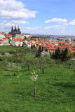 View on the spring Prague gothic Castle with the green Nature and flowering Trees Royalty Free Stock Image