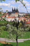 View on the spring Prague gothic Castle with the green Nature and flowering Trees Stock Image