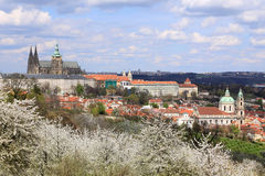View on the spring Prague with gothic Castle with the green Nature and flowering Trees Stock Photos