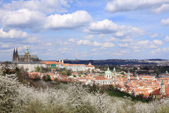View on the spring Prague gothic Castle with the green Nature and flowering Trees Stock Photo