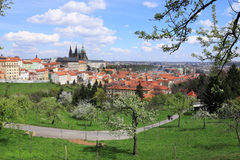 View on the spring Prague gothic Castle with green Nature and flowering Trees, Czech Republic Stock Images