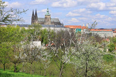 View on the spring Prague gothic Castle with green Nature and flowering Trees, Czech Republic Royalty Free Stock Photo