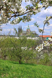 View on the spring Prague gothic Castle with green Nature and flowering Trees, Czech Republic Stock Photos