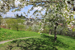 View on the spring Prague gothic Castle with green Nature and flowering Trees, Czech Republic Royalty Free Stock Photos