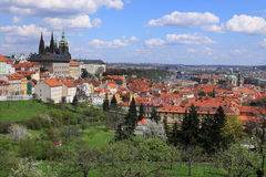 View on the spring Prague gothic Castle with the green Nature and flowering Trees, Czech Republic Royalty Free Stock Images
