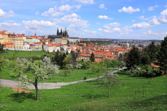 View on the spring Prague gothic Castle with the green Nature and flowering Trees, Czech Republic Stock Photography