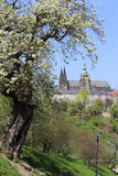 View on the spring Prague gothic Castle with the green Nature and flowering Trees, Czech Republic Stock Photo