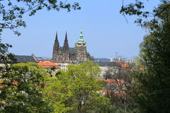 View on the spring Prague gothic Castle with the green Nature and flowering Trees, Czech Republic Royalty Free Stock Photos