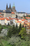 View on the spring Prague gothic Castle with the green Nature and flowering Trees, Czech Republic Stock Photos