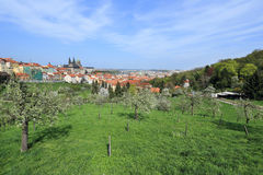 View on the spring Prague gothic Castle with the green Nature and flowering Trees, Czech Republic Royalty Free Stock Image